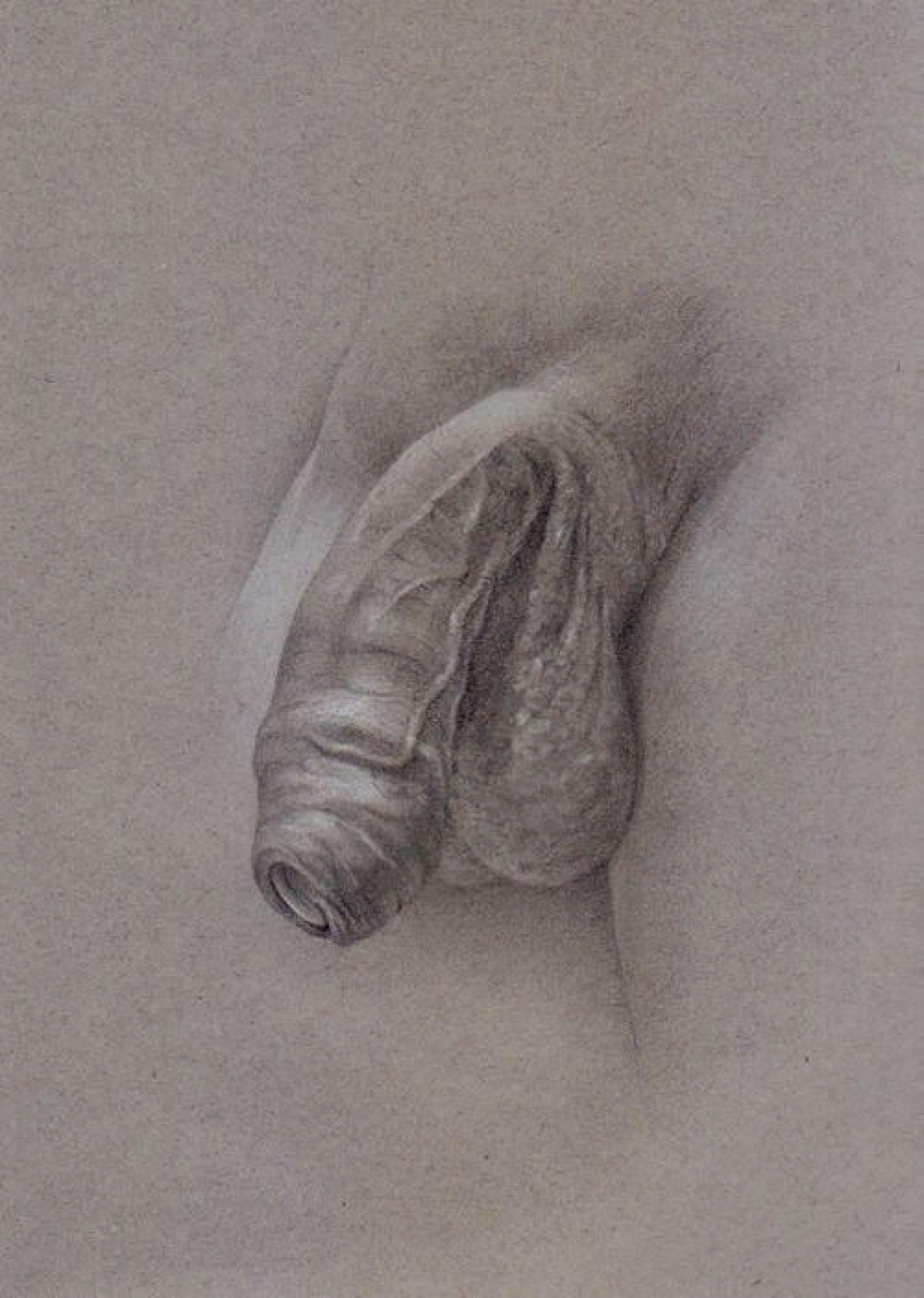 Tim patch and his magnificently artistic penis