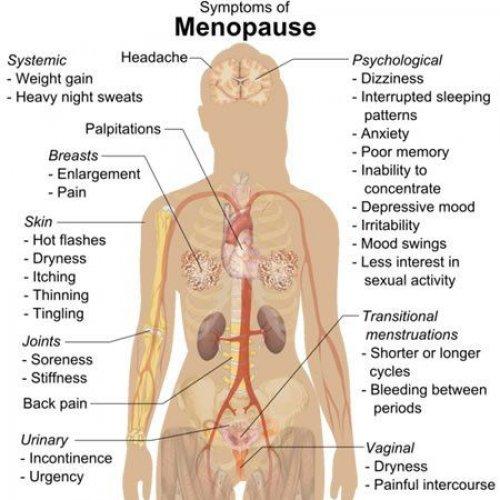 Wat veroorzaakt Menopauze?